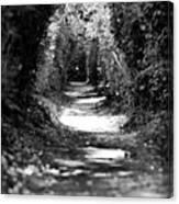A Dreamy Path Canvas Print