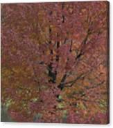 A Fall Day At Como Canvas Print