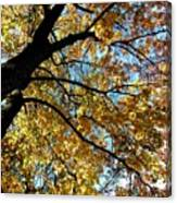 A Falling Maple Leaf Canvas Print