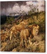 A Family Of Lions Canvas Print