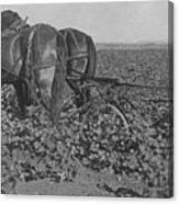 A Farmer Using A Cultivator  Canvas Print