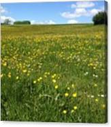 A Field Of Buttercups Canvas Print