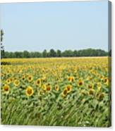 A Field Of Smiles Canvas Print