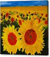 A Field Of Sunflowers Canvas Print