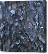 A Fire Scarred Tree Trunk Whose Thick Canvas Print