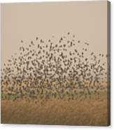 A Flock Of Birds Swarming A Field Canvas Print
