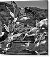 A Flock Of Seagulls Flying High To Summer Sky Canvas Print