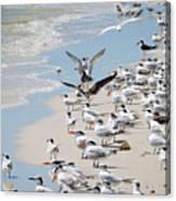 A Flock Of Seagulls Canvas Print