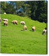A Flock Of Sheep Grazes On Lush Grass Canvas Print