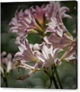 Peppermint Surprise Lily - A Floral Abstract Canvas Print