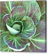 A Floral I Canvas Print
