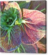 A Floral II Canvas Print