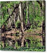 A Florida Riverine Forest 2 Canvas Print