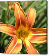A Flower At The Farm Canvas Print