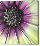 A Flower's Day Canvas Print