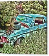 A Forgotten Mustang Canvas Print