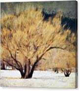 A Forgotten Winter Canvas Print