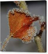 A Frosted Leaf  Canvas Print