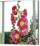 A Garden Greenhouse - Hollyhock Canvas Print