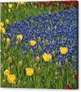 A Garden Of Colorful Tulips And Grape Canvas Print