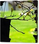 A Glimpse Of Spring Canvas Print