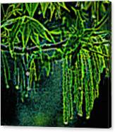 A Glow With Dew Canvas Print