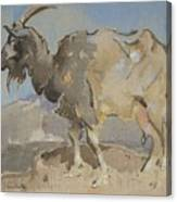 A Goat By Joseph Crawhall 1861-1913 Canvas Print