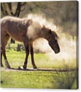 A Good Dust Bath  Canvas Print