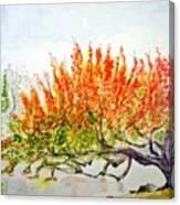 A Graceful Bow Canvas Print
