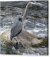 A Great Blue Heron At The Spokane River 3 Canvas Print