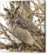 A Great Horned Owl's Wide Eyes Canvas Print