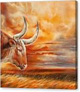 A Great Texas Longhorn Steer Inspired The Bevo Song Canvas Print