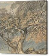 A Great Tree Canvas Print