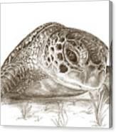 A Green Sea Turtle In Earthtones Canvas Print