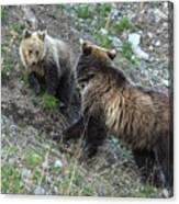 A Grizzly Moment Canvas Print
