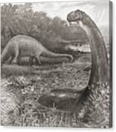 A Group Of Brontosaurs, Or Thunder Canvas Print