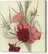 A Group Of Clove Carnations Canvas Print