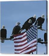A Group Of Northern American Bald Canvas Print