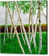 A Grove Of Birches 1 Canvas Print