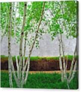 A Grove Of Birches 2 Canvas Print