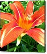 A Grrreat Tiger Lily Canvas Print