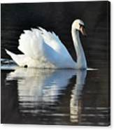 A Happy Swan Canvas Print