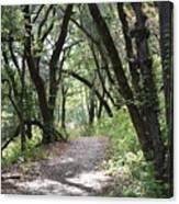 A Happy Trail Canvas Print