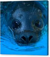 A Harbor Seal At The Lincoln Childrens Canvas Print