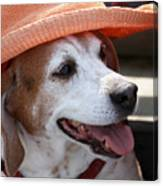 A Hat For Buddy Canvas Print
