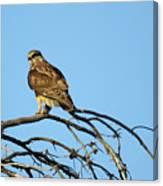 A Hawks Eye View Canvas Print