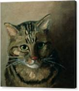 A Head Study Of A Tabby Cat Canvas Print