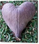 A Heart Never Dies Canvas Print