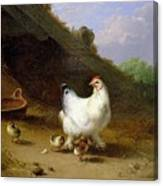 A Hen With Her Chicks Canvas Print