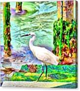 a heron is walking on a stair about the Grand Canal Canvas Print